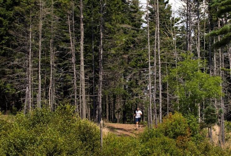 runner, Point Pleasant Park, Halifax,