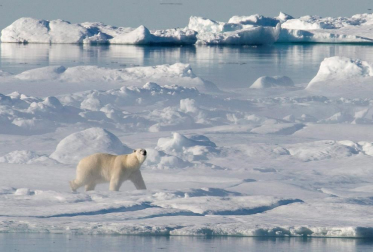 polar bear, ice flow, Baffin Bay,