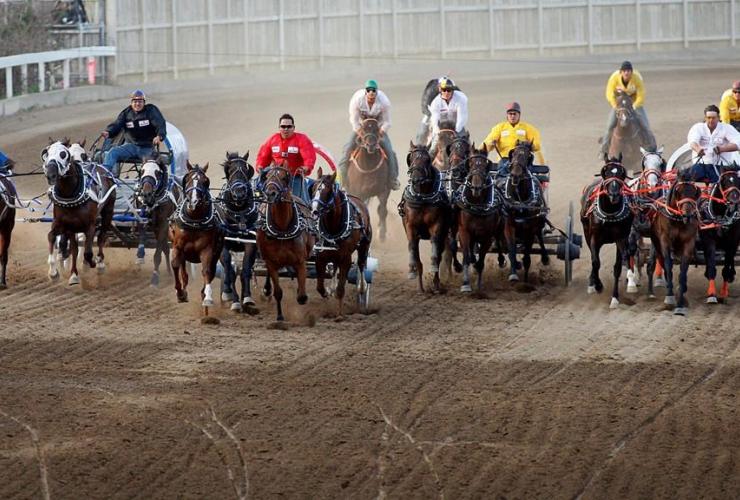 chuckwagon race, Calgary Stampede, Calgary,