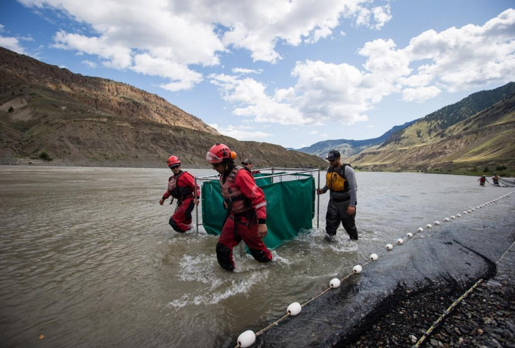 Fisheries and Oceans Canada, B.C. Wildfire Service, salmon, holding pen, Fraser River,