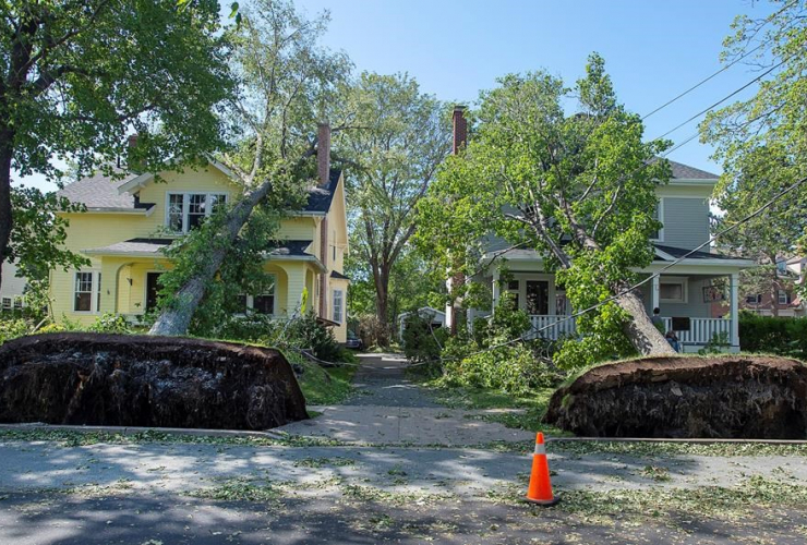 fallen trees, houses, Halifax,
