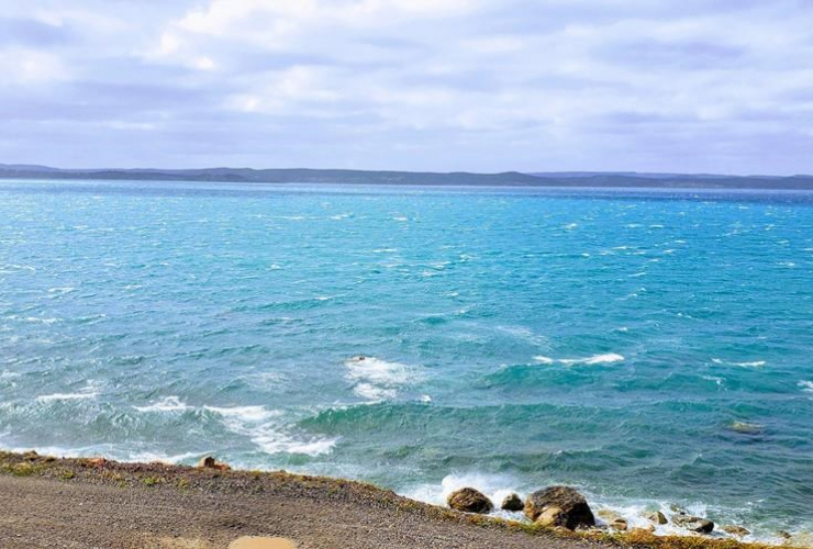 Phytoplankton, blooms, Seal Cove, Conception Bay,