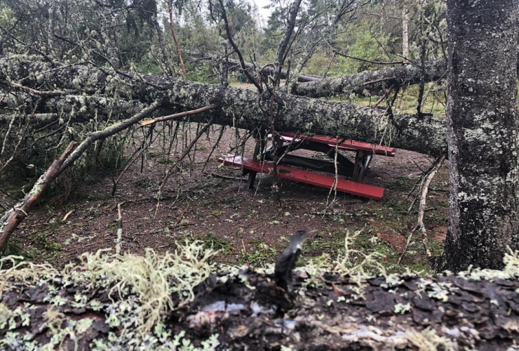 fallen tree, picnic table, Prince Edward Island National Park, P.E.I.,