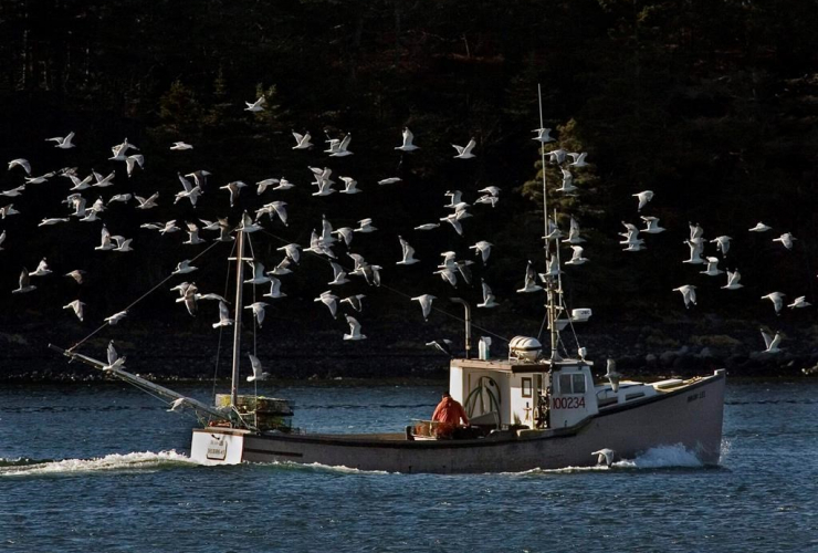 lobster boat, sea gulls, Eastern Passage, N.S.,