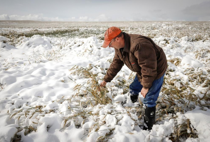 Farmer, David Reid, wheat crop,