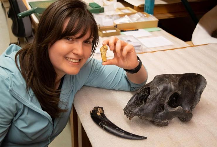 Ashley Reynolds, Smilodon fatalis metacarpal, Medicine Hat, Alberta,