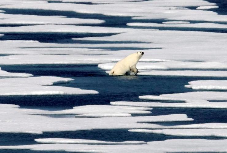 polar bear, Franklin Strait, Canadian Arctic Archipelago,