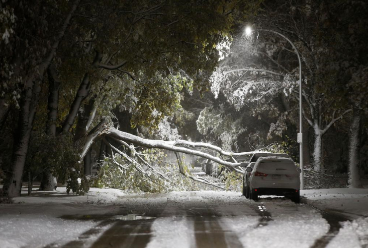 winter storm, wet snow, trees, cars, power lines, Winnipeg,