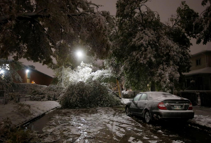 winter storm, wet snow, fallen trees, cars, power lines, Winnipeg,