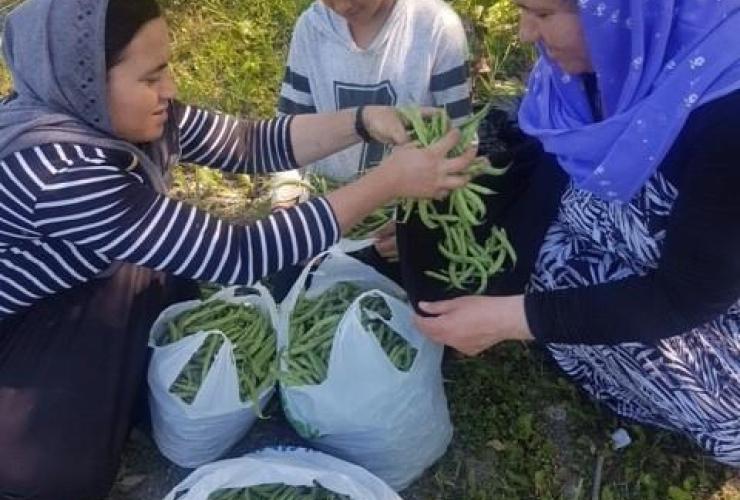 Yazidi refugees,  vegetables,