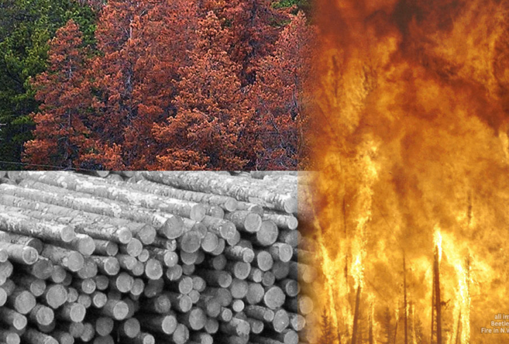 Canada's managed forests are dying, burning and being cut faster than they are growing back
