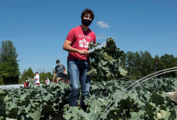 Prime Minister Justin Trudeau, harvests, broccoli, Ottawa Food Bank Farm, Canada Day,
