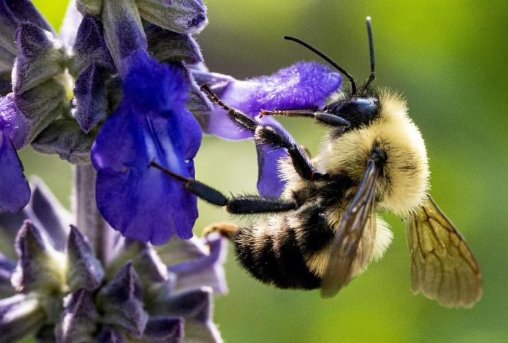 bee, pollen, flower,