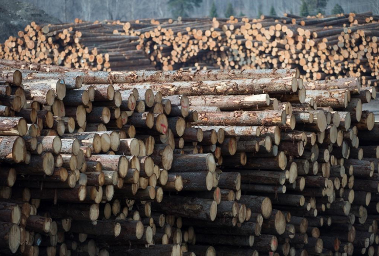 Softwood lumber, Tolko Industries, Heffley Creek,