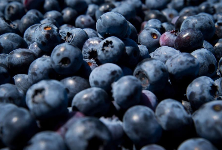 blueberries, Emma Lea Farms,