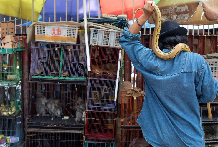 A person holding a yellow snaked around their shoulders stands in front of caged animals