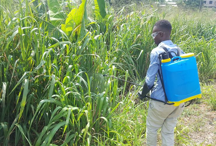 Man sprays herbicide on plants.
