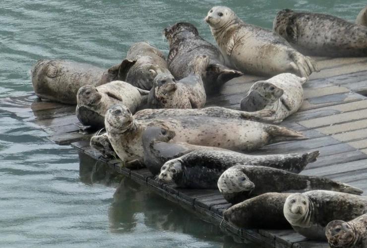 Seals,