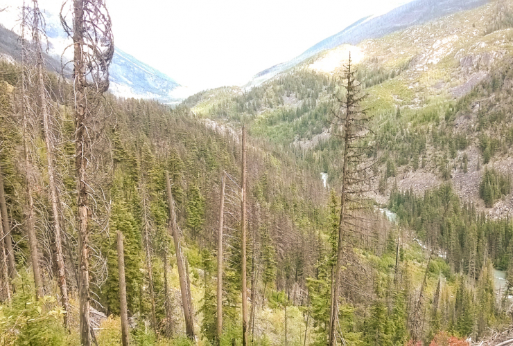 Insect kills and wildfires scar the remote and protected Stein Valley wilderness in B.C. Photo credit: Barry Saxifrage, 2018
