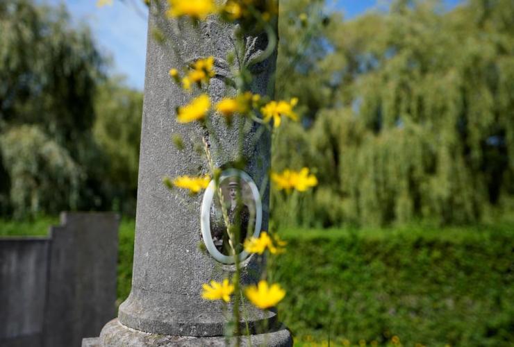 wildflower, grave, Schoonselhof cemetery, Hoboken, Belgium,