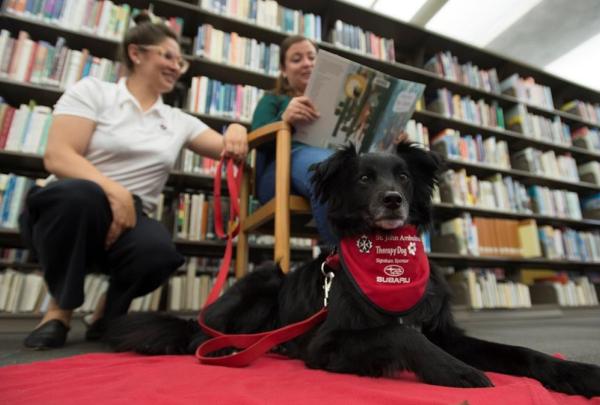 Anna Boekoven, Ashten Black, Saint John Ambulance therapy dogs, dog, Pig, Vancouver Public Library,