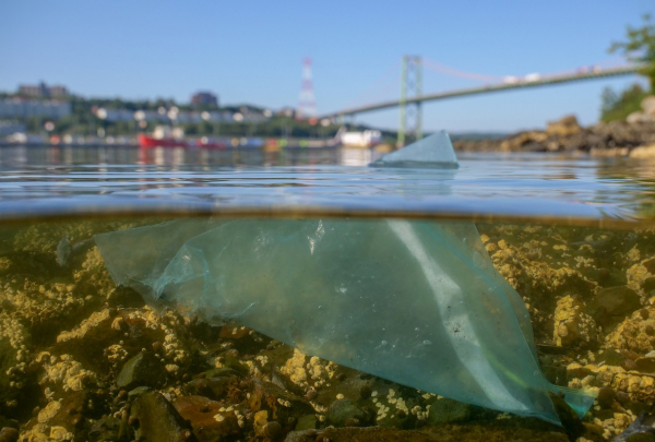 A plastic bag floats in the water beneath a city skyline