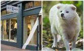 Kit and Ace, raccoon dog, fur industry, fur fashion, fur trade, animal cruelty