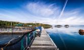 Alert Bay, salmon farming