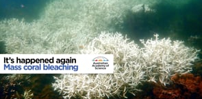 It's happened again: Mass coral bleaching