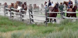 """Sundance Guest Ranch """"The Jingle"""""""